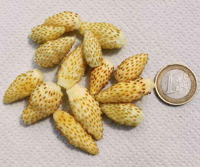Yellow wonder vivai veimaro vivaio specializzato nella for Kiwi giallo piante acquisto