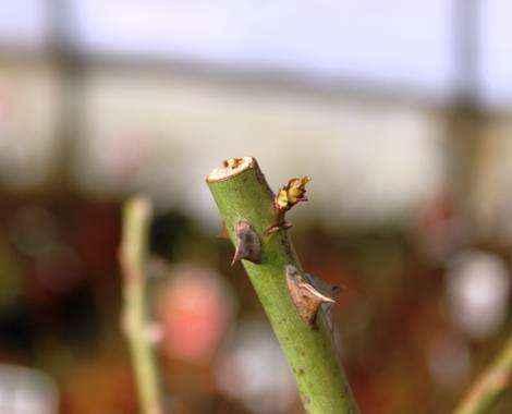tipo-di-taglio-pependicolare-1